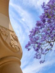 image of blue sky, Great Court sandstone pillar, and jacaranda tree
