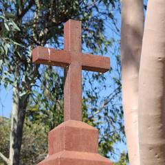 cross among gum trees