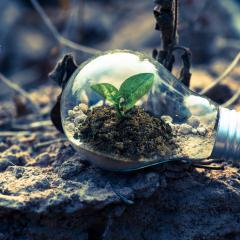 Growing ideas