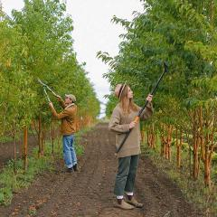 tree maintenance in an orchard